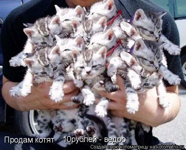 Котоматрица: Продам котят 10рублей - ведро