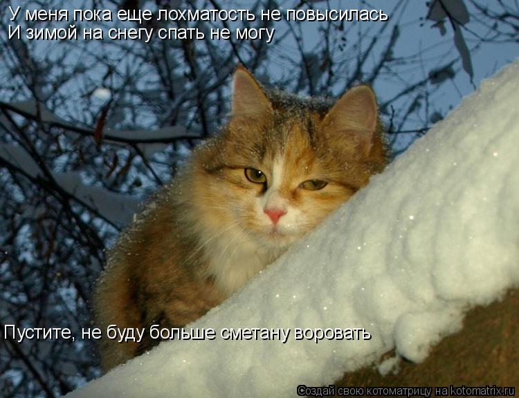 Котоматрица: У меня пока еще лохматость не повысилась И зимой на снегу спать не могу Пустите, не буду больше сметану воровать