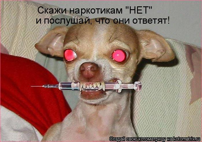 "Котоматрица: Скажи наркотикам ""НЕТ""  и послушай, что они ответят!"