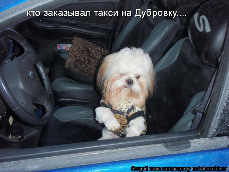 Котоматрица: кто заказывал такси на Дубровку....
