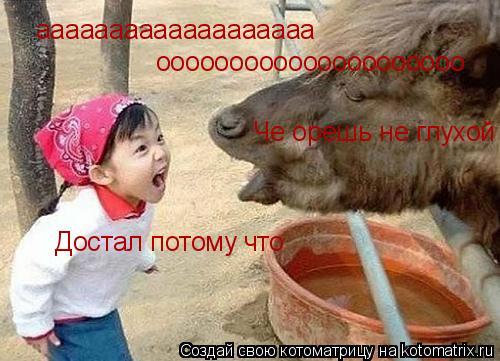 Котоматрица: ааааааааааааааааааа ооооооооооооооооооооо Че орешь не глухой Достал потому что