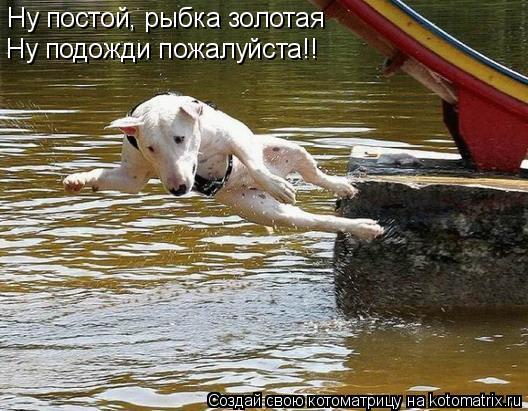 Котоматрица: Ну постой, рыбка золотая Ну подожди пожалуйста!!