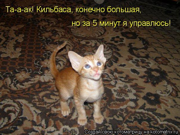 Котоматрица: Та-а-ак! Кильбаса, конечно большая,  но за 5 минут я управлюсь!