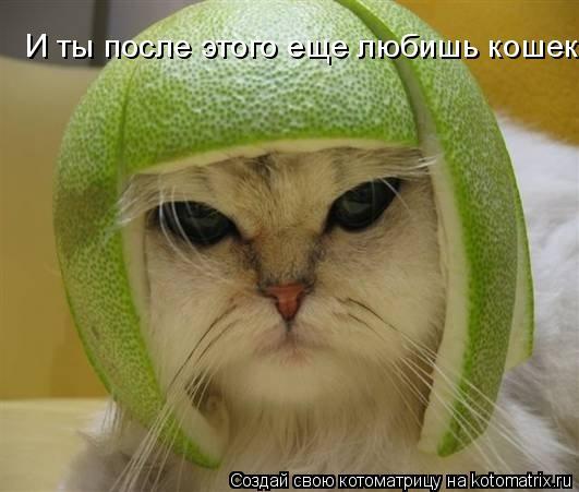 Котоматрица: И ты после этого еще любишь кошек