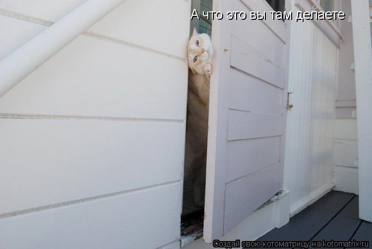 Котоматрица: А что это вы там делаете