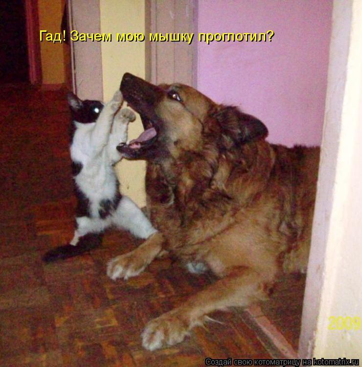 Котоматрица: Гад! Зачем мою мышку проглотил?