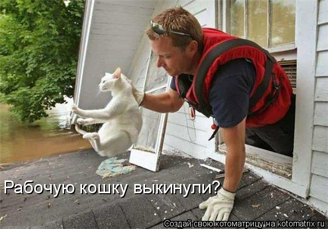 Котоматрица: Рабочую кошку выкинули?