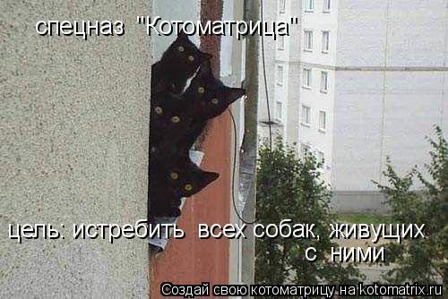 """Котоматрица: спецназ  """"Котоматрица"""" цель: истребить  всех собак, живущих  с  ними"""