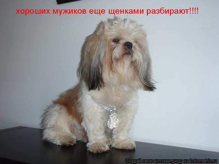 Котоматрица: хороших мужиков еще щенками разбирают!!!!
