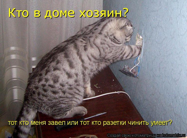 Котоматрица: Кто в доме хозяин? тот кто меня завел или тот кто разетки чинить умеет?