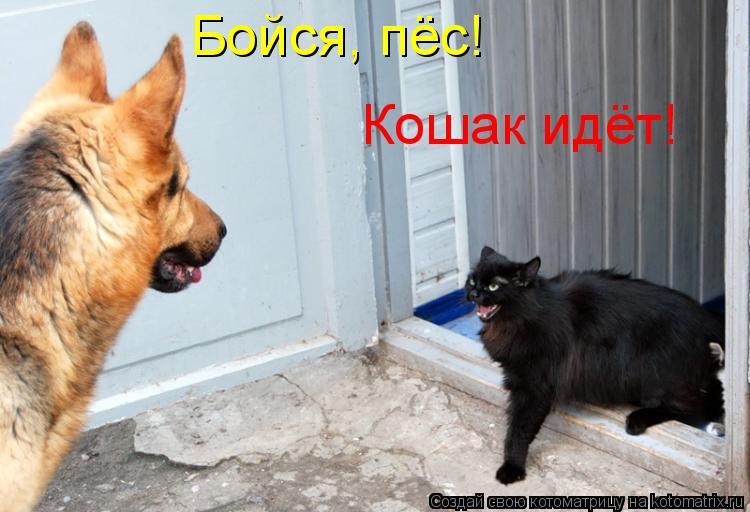 Котоматрица: Бойся, пёс! Кошак идёт!