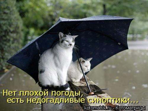 Котоматрица: Нет плохой погоды,   есть недогадливые синоптики...