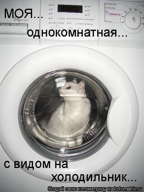 Котоматрица: МОЯ... однокомнатная... с видом на  холодильник...