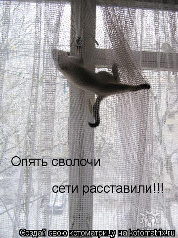 Котоматрица: Опять сволочи  сети расставили!!!