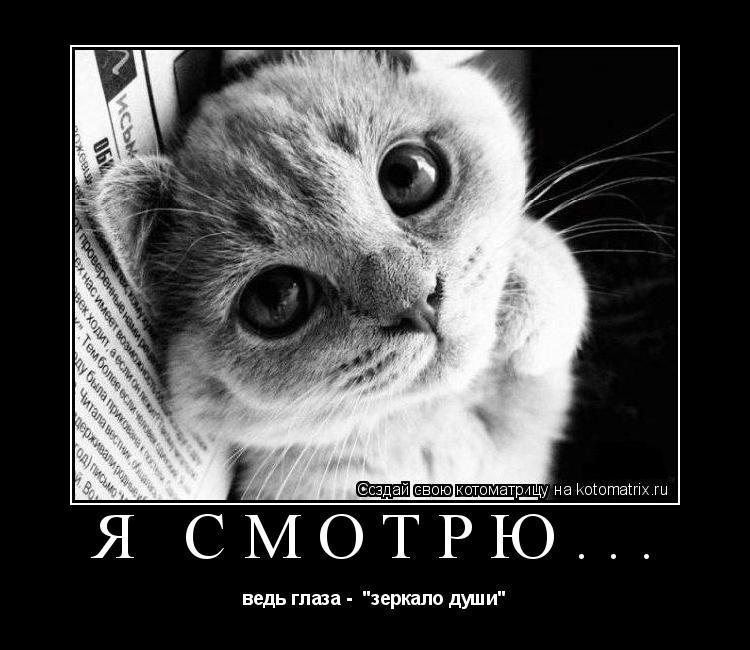 """Котоматрица: я смотрю... ведь глаза -  """"зеркало души"""""""
