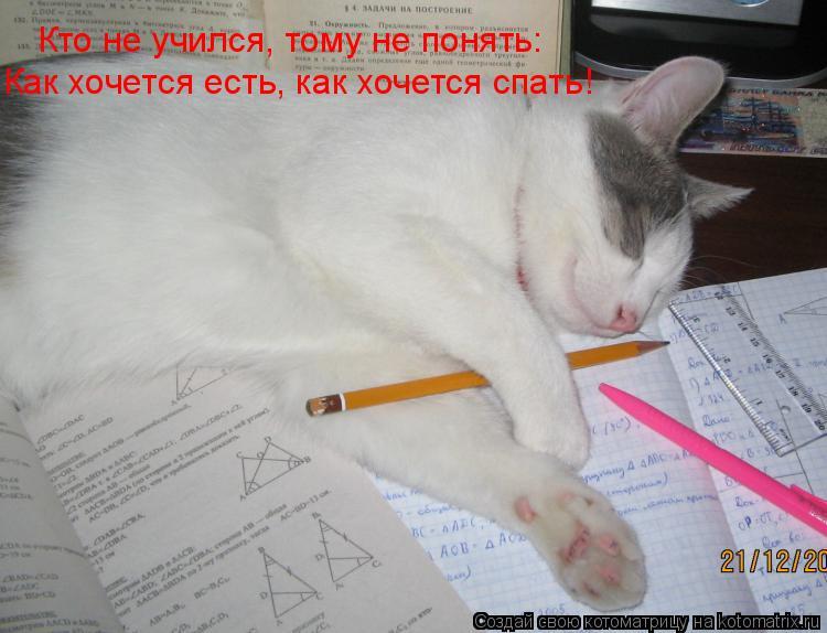 Котоматрица: Кто не учился, тому не понять: Как хочется есть, как хочется спать!