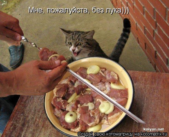 Котоматрица: Мне, пожалуйста, без лука)))