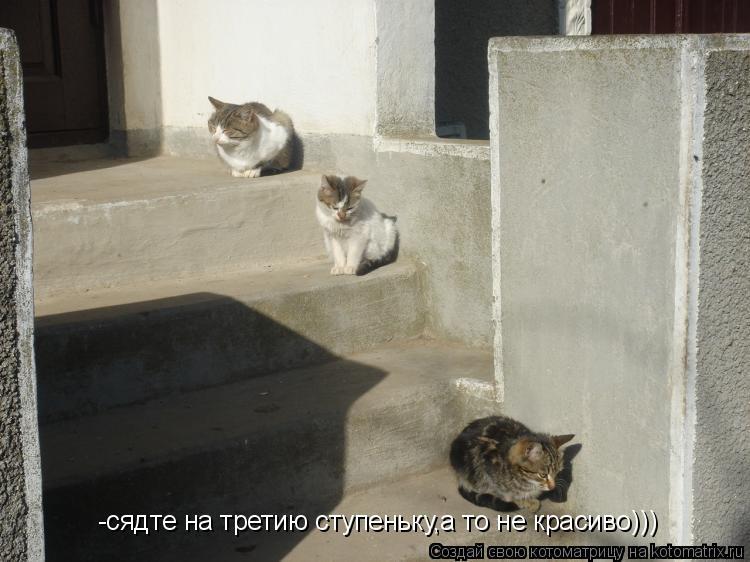 Котоматрица: -сядте на третию ступеньку,а то не красиво)))