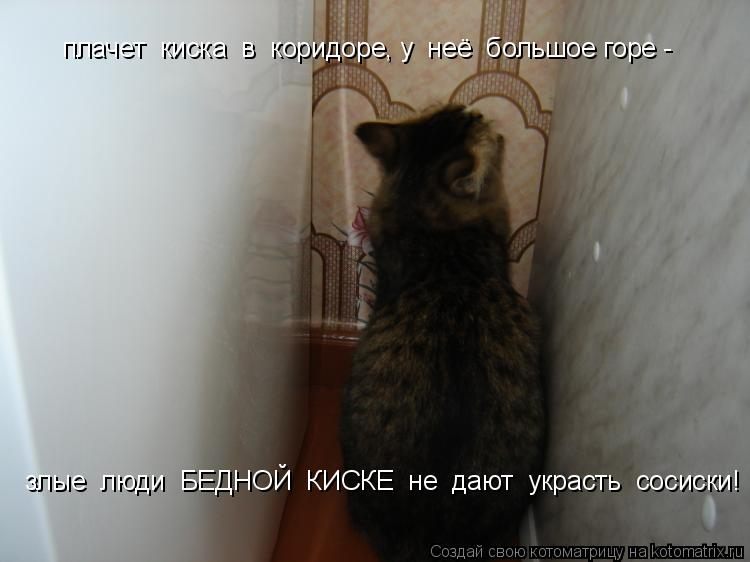 Котоматрица: плачет  киска  в  коридоре, у  неё  большое горе -  злые  люди  БЕДНОЙ  КИСКЕ  не  дают  украсть  сосиски!