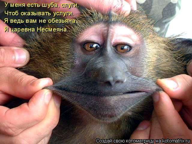 Котоматрица: Я ведь вам не обезьяна, Я царевна Несмеяна.. У меня есть шуба, слуги,  Чтоб оказывать услуги.