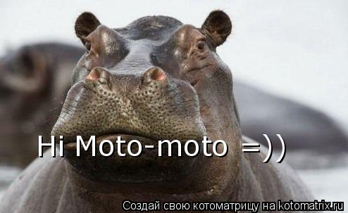 Котоматрица: Hi Moto-moto =))
