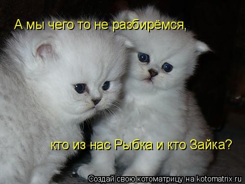 Котоматрица: А мы чего то не разбирëмся, кто из нас Рыбка и кто Зайка?