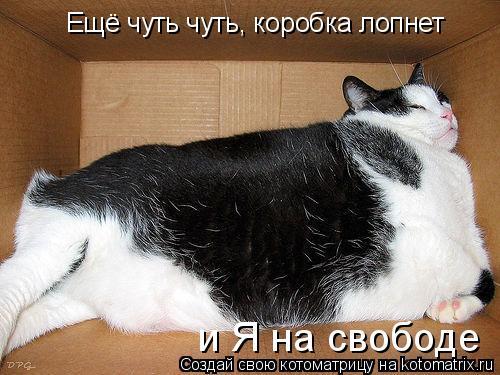 Котоматрица: Ещё чуть чуть, коробка лопнет и Я на свободе