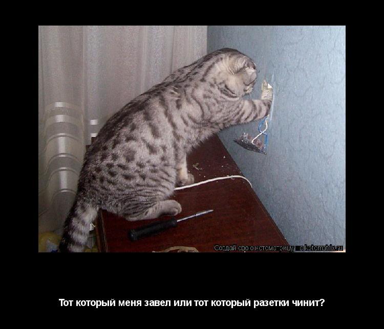 Котоматрица: Кто в доме хозяин? Тот который меня завел или тот который разетки чинит?