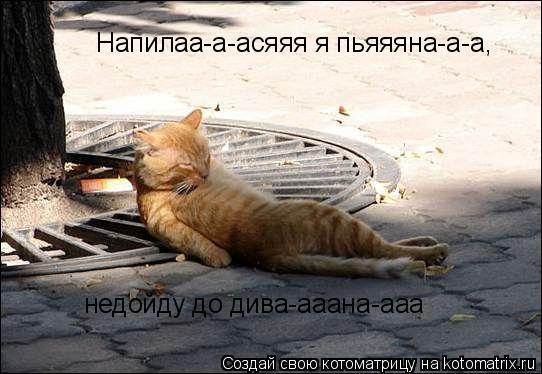 Котоматрица: Напилаа-а-асяяя я пьяяяна-а-а, недойду до дива-ааана-ааа