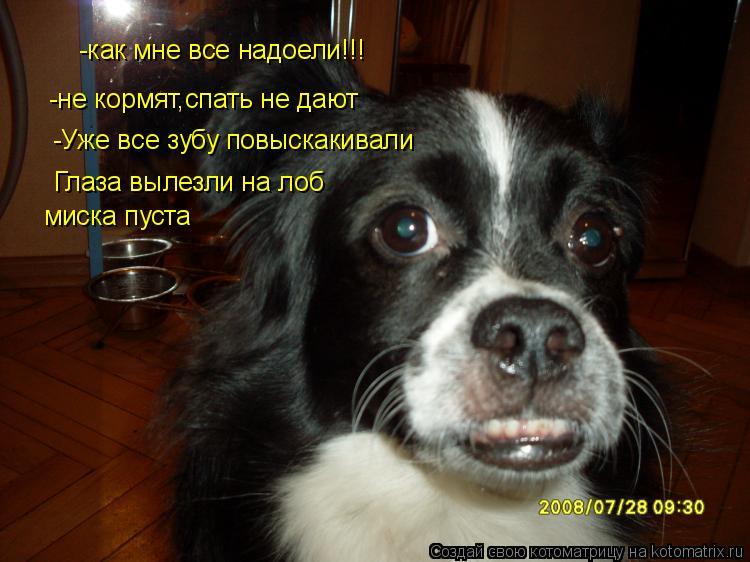 Котоматрица: -как мне все надоели!!! -не кормят,спать не дают -Уже все зубу повыскакивали Глаза вылезли на лоб миска пуста