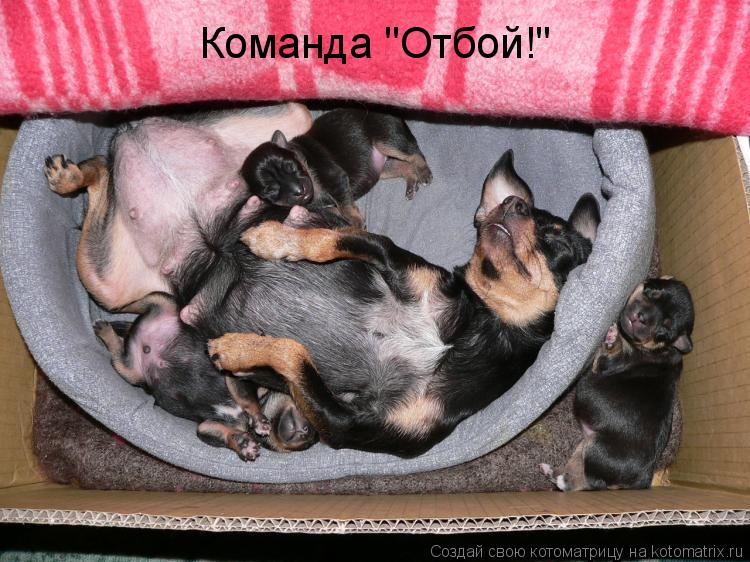 "Котоматрица: Команда ""Отбой!"""
