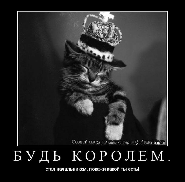 Котоматрица: Будь королем. стал начальником, покажи какой ты есть!