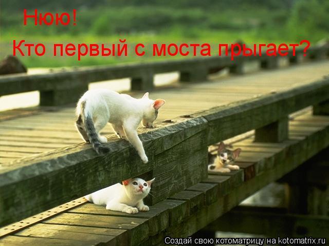Котоматрица: Нюю! Кто первый с моста прыгает?