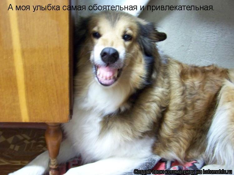 Котоматрица: А моя улыбка самая обоятельная и привлекательная.