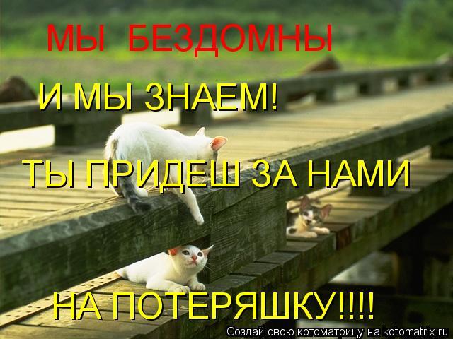 Котоматрица: МЫ БЕЗДОМНЫ И МЫ ЗНАЕМ! ТЫ ПРИДЕШ ЗА НАМИ НА ПОТЕРЯШКУ!!!!