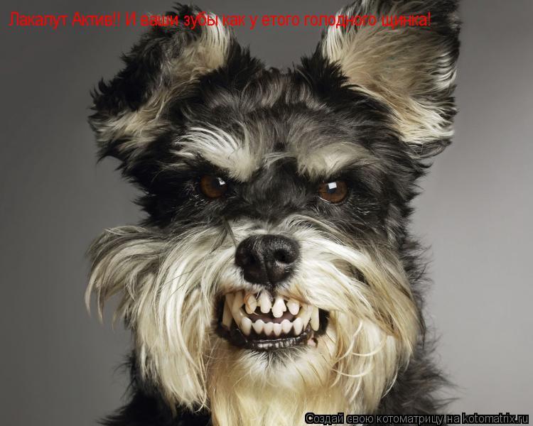 Котоматрица: Лакалут Актив!! И ваши зубы как у етого голодного щинка!