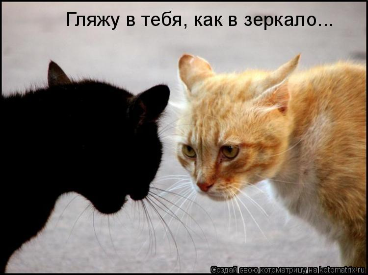 Котоматрица: Гляжу в тебя, как в зеркало...