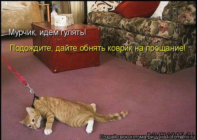 Котоматрица: Мурчик, идем гулять! Подождите, дайте обнять коврик на прощание!