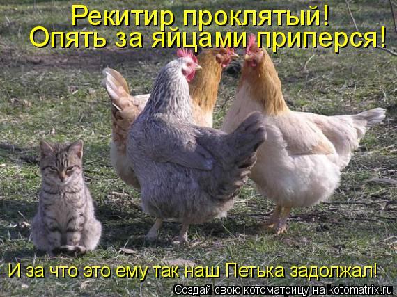 Котоматрица: Рекитир проклятый!  Опять за яйцами приперся! И за что это ему так наш Петька задолжал!