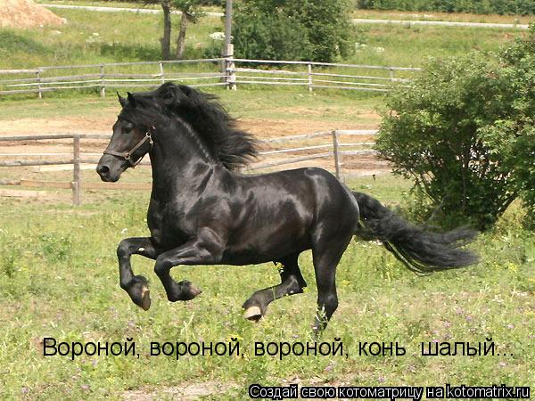 Котоматрица: Вороной, вороной, вороной, конь  шалый...