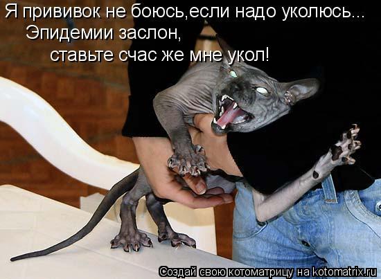 Котоматрица: Я прививок не боюсь,если надо уколюсь... Эпидемии заслон,  ставьте счас же мне укол!