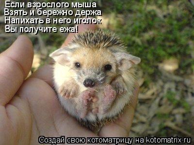 Котоматрица: Если взрослого мыша Взять и бережно держа Напихать в него иголок Вы получите ежа!