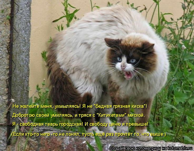"""Котоматрица: Не жалейте меня, ухмыляясь! Я не """"бедная грязная киска""""! Добротою своей умиляясь, и тряся с """"Китикетами"""" миской. Я - свободная тварь городская!"""