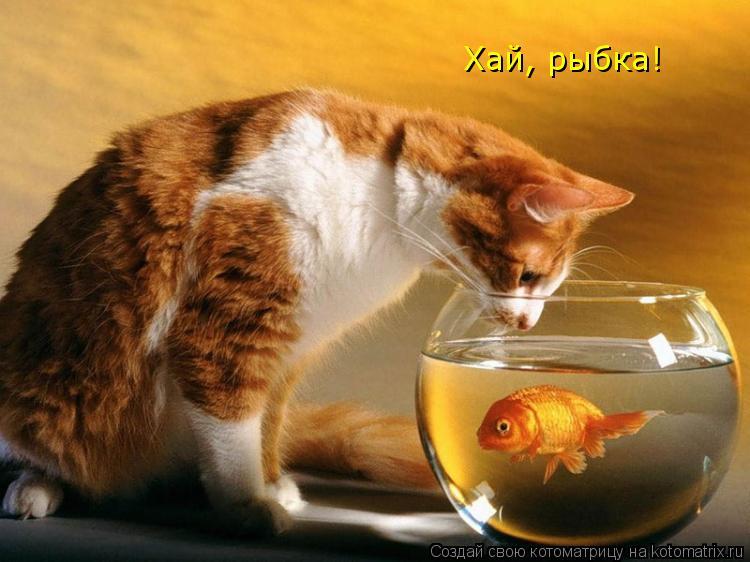 Котоматрица: Хай, рыбка!