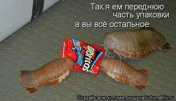 Котоматрица: Так.я ем переднюю часть упаковки а вы всё остальное.