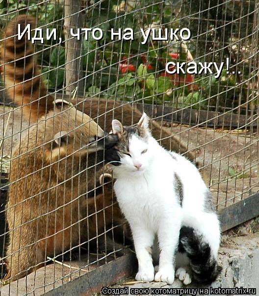 Котоматрица: Иди, что на ушко скажу!..