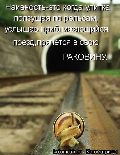 Котоматрица: Наивность-это когда улитка ползущая по рельсам, услышав приближающийся  поезд,прячется в свою РАКОВИНУ.