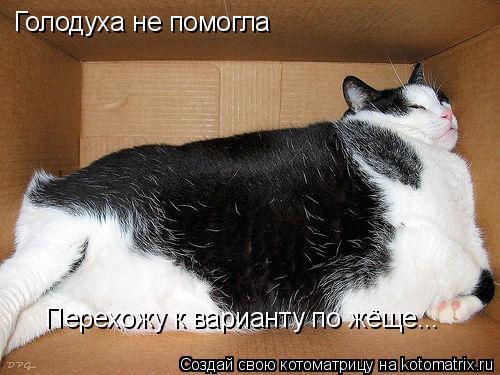 Котоматрица: Голодуха не помогла Перехожу к варианту по жёще...