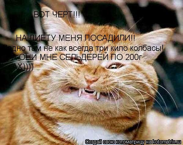 Котоматрица: ВОТ ЧЕРТ!!! НА ДИЕТУ МЕНЯ ПОСАДИЛИ!! Ладно там не как всегда три кило колбасы! А ОНИ МНЕ СЕЛЬДЕРЕЙ ПО 200г АХ))))
