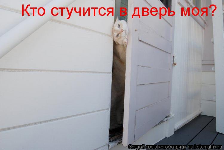 Котоматрица: Кто стучится в дверь моя?